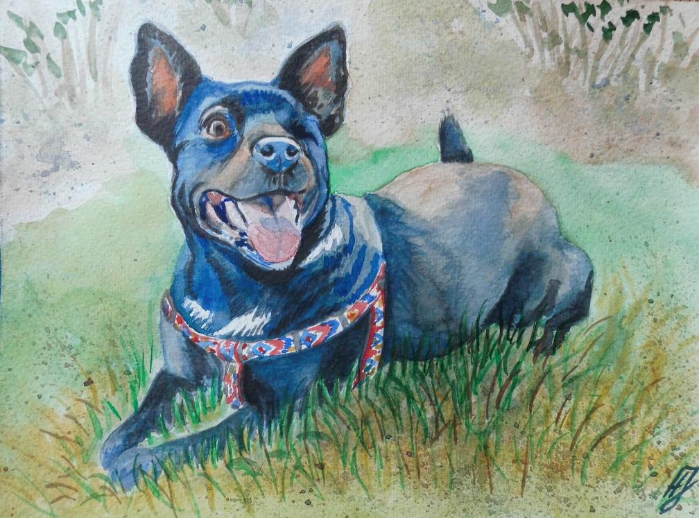 akwarela pies - małgorzata jaskłowska