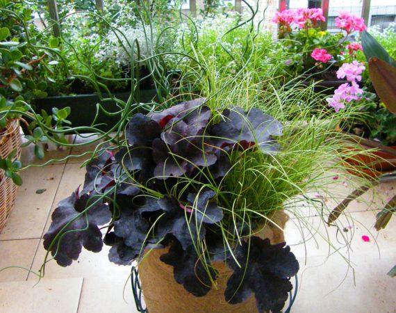 turzyca, trawy ozdobne